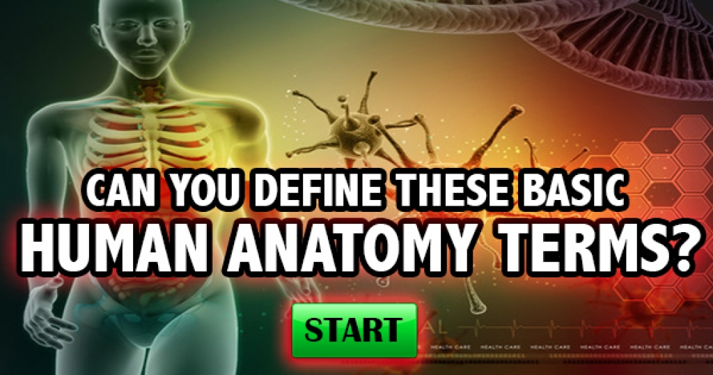 Can You Define These Basic Human Anatomy Terms?