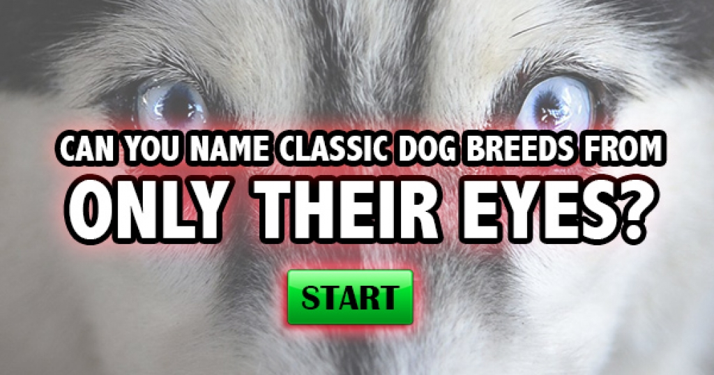 Can You Name Classic Dog Breeds From Only Their Eyes?