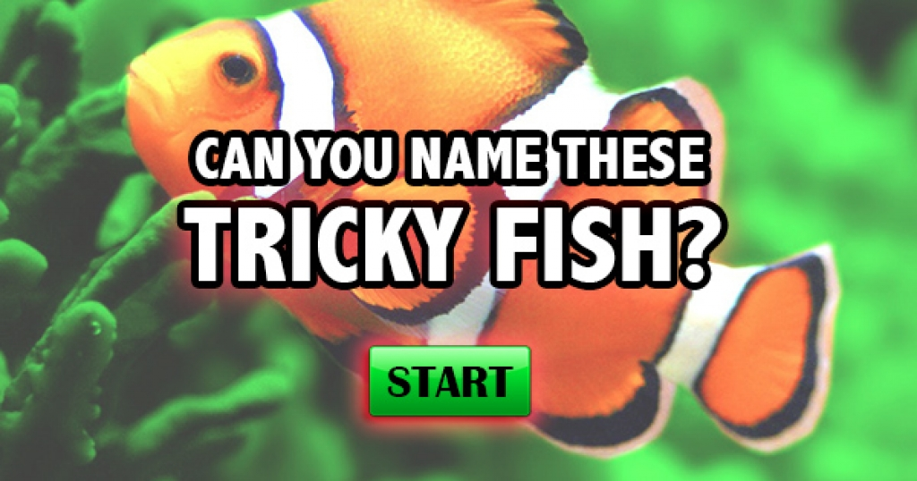 Can You Name These Tricky Fish?