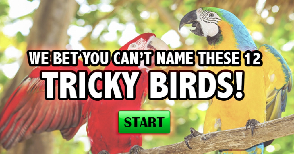 We Bet You Can't Name These 12 Tricky Birds!