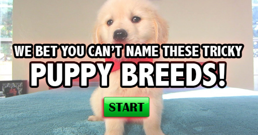 We Bet You Can't Name These Tricky Puppy Breeds!