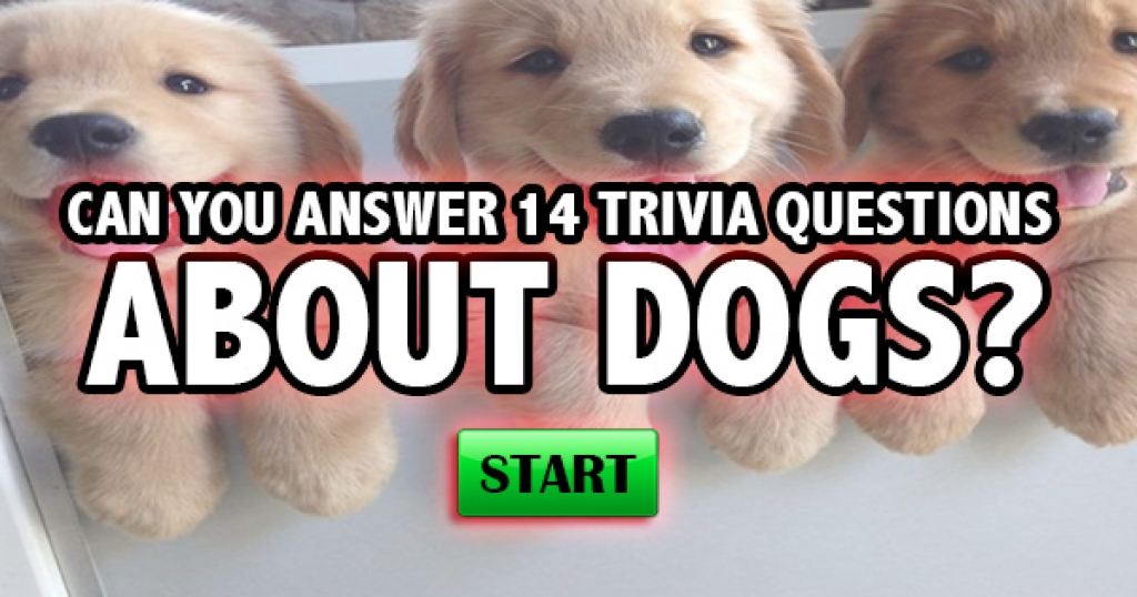 Can You Answer 14 Trivia Questions About Dogs?