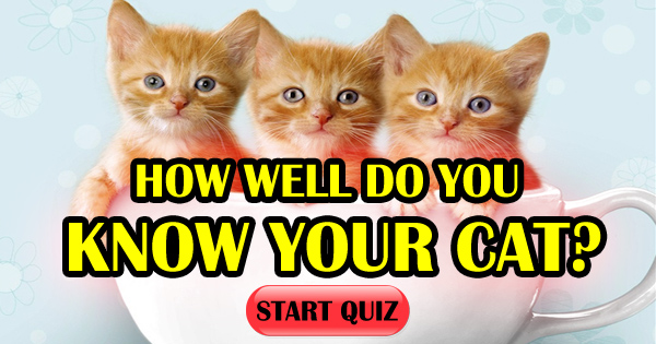 How Well Do You Know Your Cat?