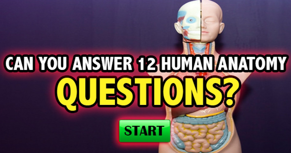 Quizfreak Can You Answer 12 Basic Human Anatomy Questions