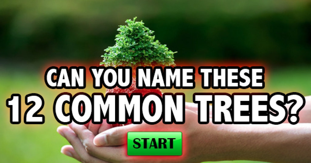 Can You Name These 12 Common Trees?
