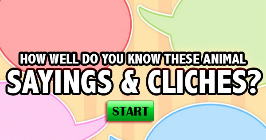 How Well Do You Know These Animal Sayings & Clichés?