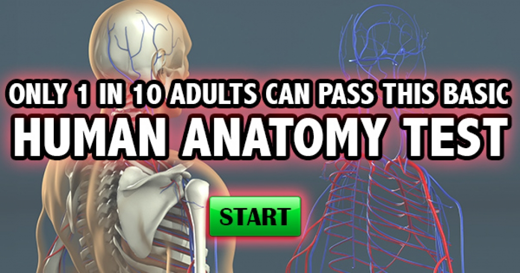 Only 1 In 10 Adults Can Pass This Basic Human Anatomy Test